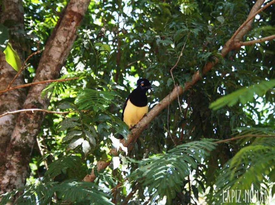 pajaros-parque-nacional-iguazú