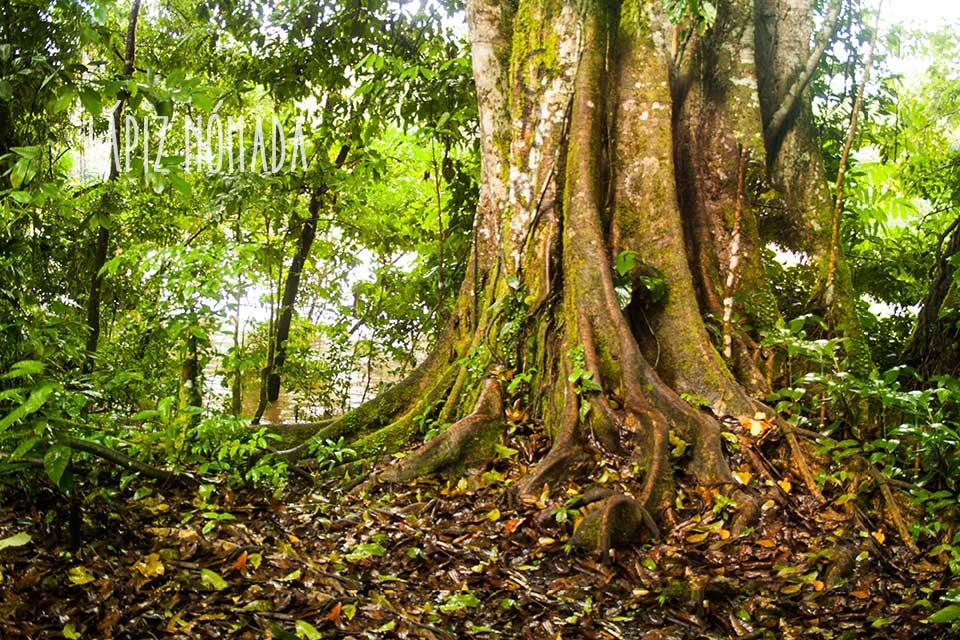 Misión: Puerto Misahualli | Puerta a la selva ecuatoriana