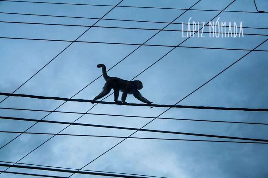 puerto misahuallí monos tena ecuador