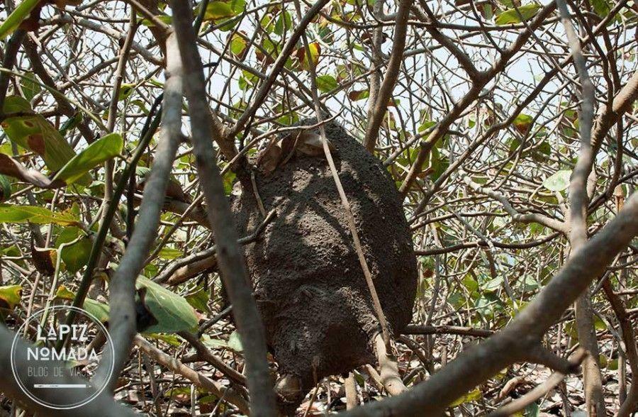 tayrona-l%C3%A1piz-n%C3%B3mada-11-900x588 ▷ Parque natural Tayrona   Precios y datos ✅