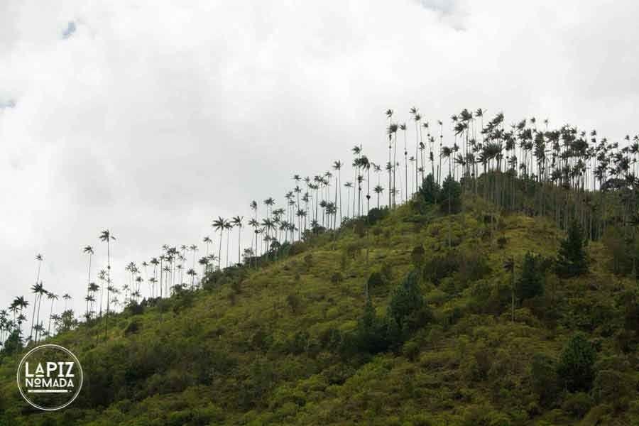 valle del cocora precios