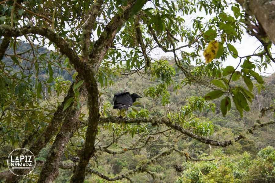Lápiz-nómada-blog-viajes-valle-de-cocora-IMG_0121